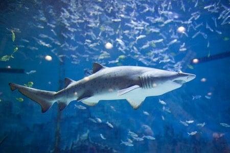 Shark Tank Trademark